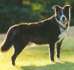 Jake the inspiration for the Shelter Dog one of Lighthearted Press and Christine Davis's famous books