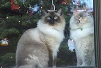 Joyce Henson's cat