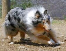 Lassie Lu